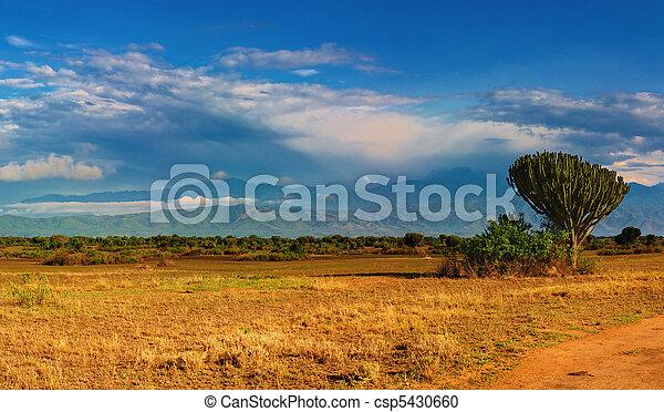afričan, savana - csp5430660