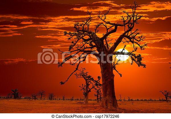 Africa sunset in Baobab trees colorful - csp17972246