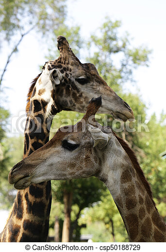 african animal cute funny giraffe stock photo csp50188729 - Collection of funny african wildlife photos