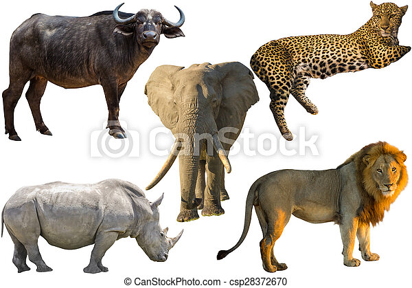 african big five animals  buffalo  elephant  leopard zoo clipart for kids zoo clip art black and white