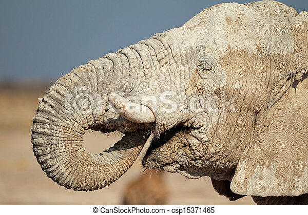 African elephant covered in mud - csp15371465