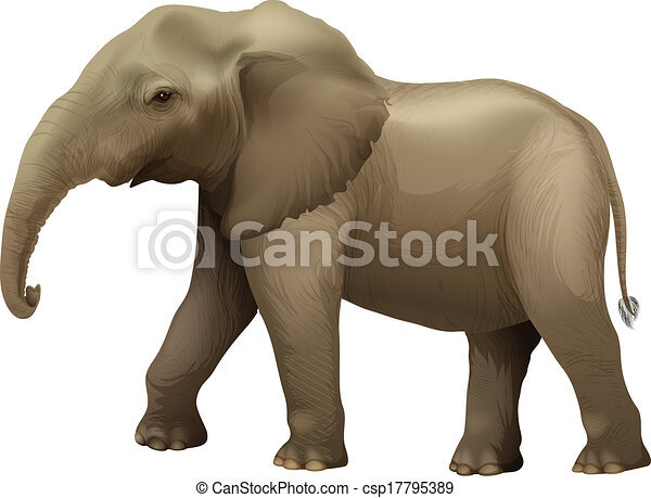 African elephant - csp17795389