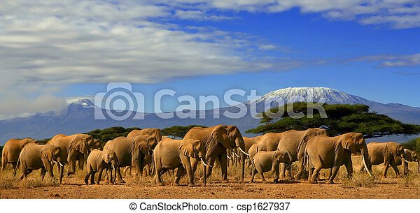 African Elephant Herd And Kilimanjaro Tanzania - csp1627937