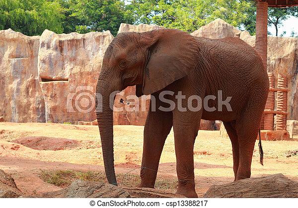 African elephant - csp13388217