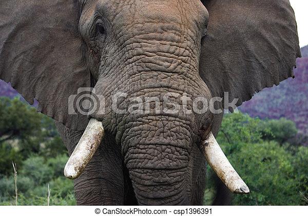 African Elephant - csp1396391