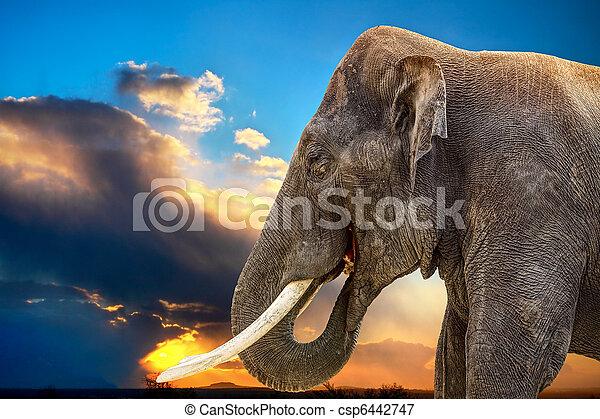 African Elephant - csp6442747