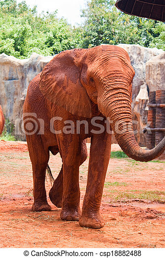 African elephant - csp18882488