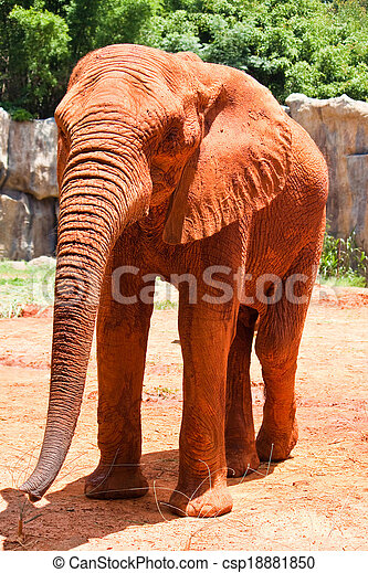 African elephant - csp18881850