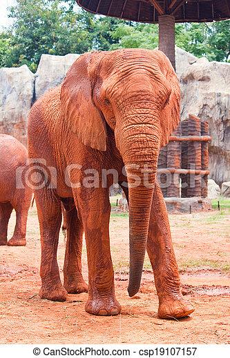 African elephant - csp19107157