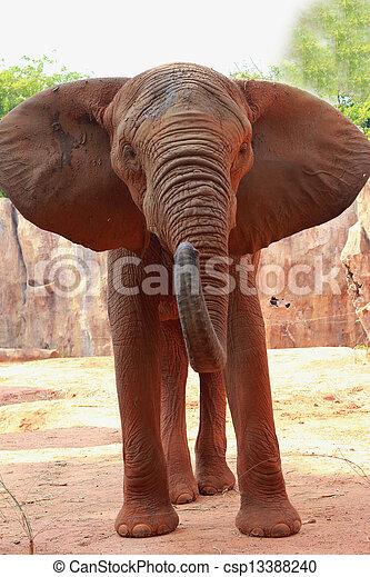 African elephant - csp13388240