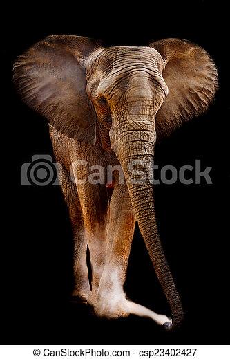 African elephant - csp23402427