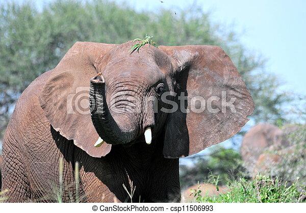 African elephant - csp11506993