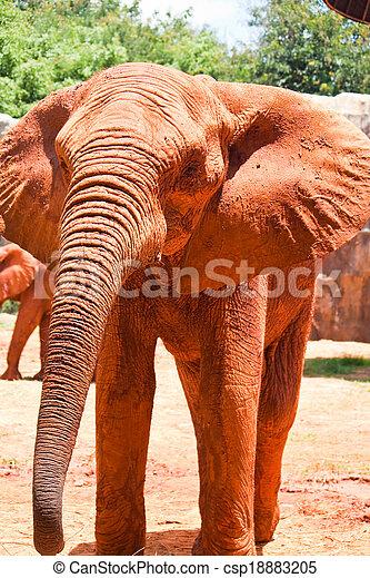 African elephant - csp18883205