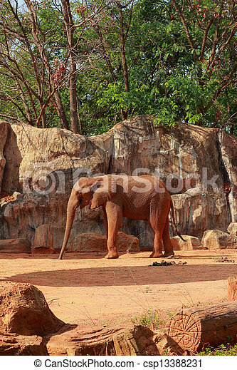 African elephant - csp13388231