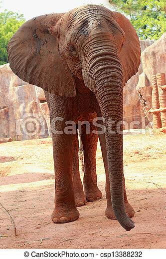 African elephant - csp13388232