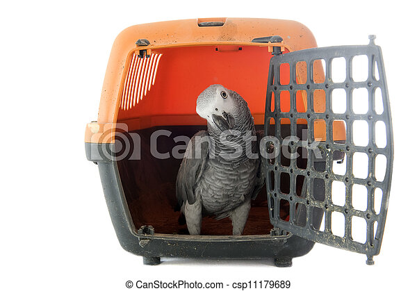 African Grey Parrot in kennel - csp11179689