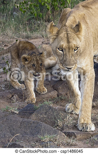 African lioness with cub - csp1486045