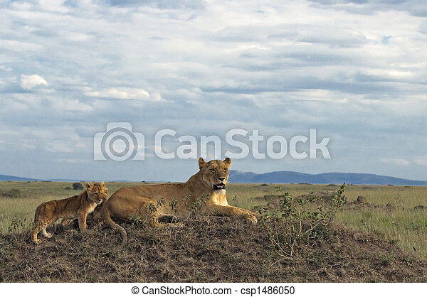 African lioness with cubs - csp1486050
