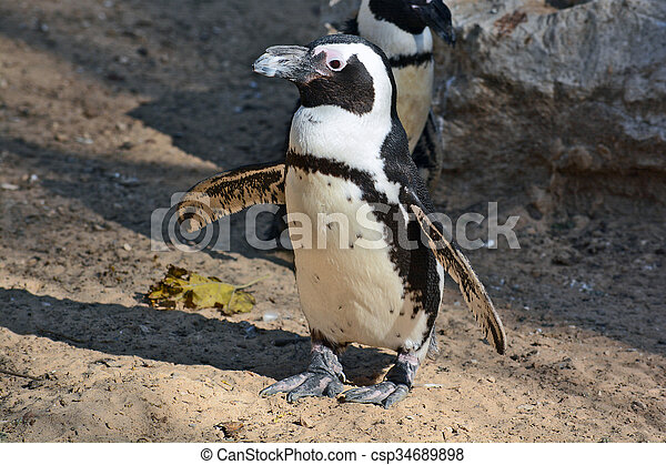 African Penguin in the Zoological Center - csp34689898