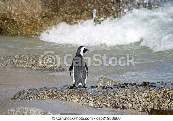 African penguin - csp21988660