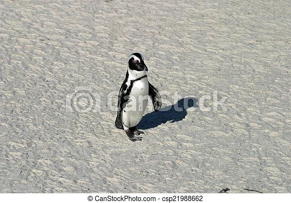 African penguin - csp21988662