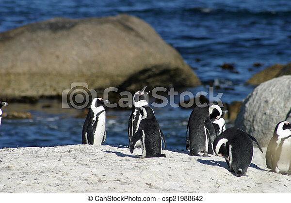African penguin - csp21988642