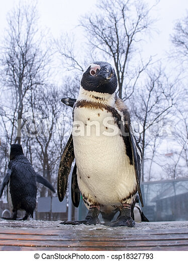 African penguin - csp18327793