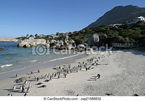 African penguin - csp21988832