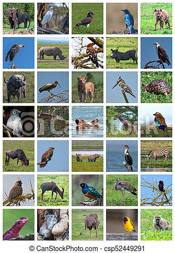 African Safari Collage Wildlife Variety