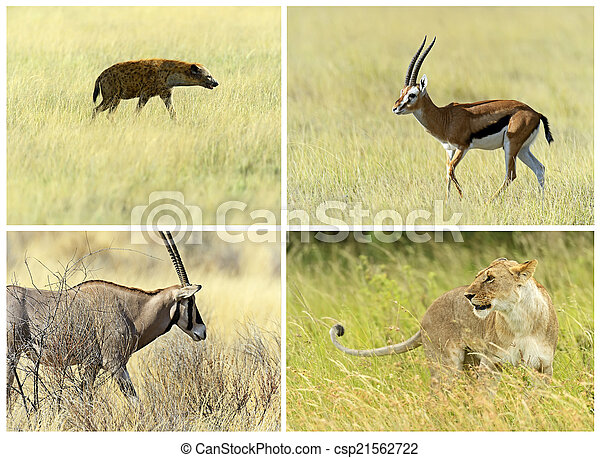 African savannah mammals in their natural habitat - csp21562722