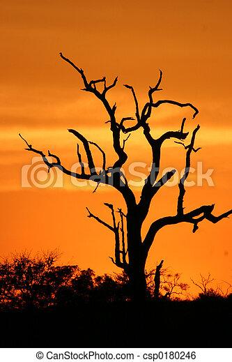 African sunset 3 - csp0180246