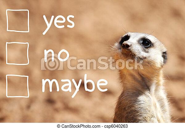 African suricate making decision - csp6040263