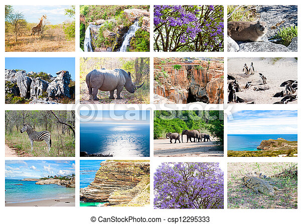 African wild animals collage, fauna diversity in Kruger Park, natural themed collection background, beautiful nature of South Africa, wildlife adventure and travel - csp12295333