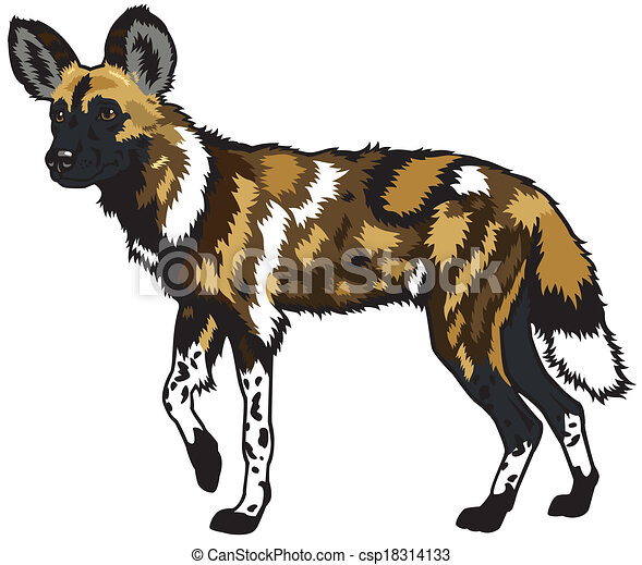 african wild dog african wild dog lycaon pictus side Hyena Silhouette laughing hyena clipart