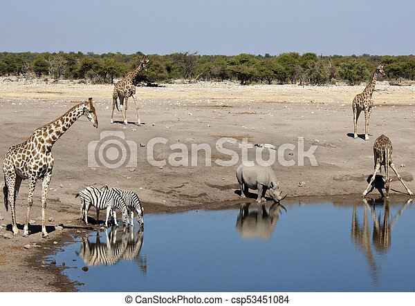 African wildlife at a waterhole in Namibia - csp53451084