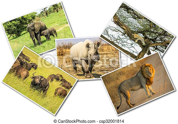 African Wildlife Collage Big Five Animals Stock