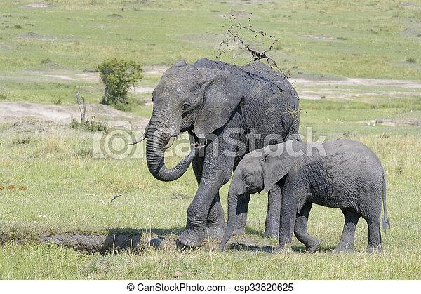 africana), (loxodonta, afrikaanse olifant - csp33820625