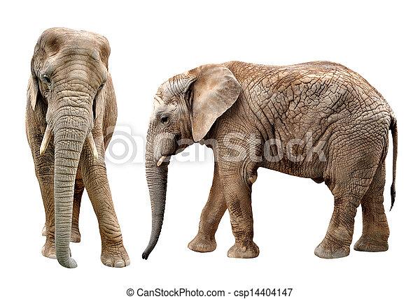 afrikaanse olifanten - csp14404147
