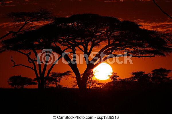 afrikas, sonnenuntergang, safari, bäume - csp1336316