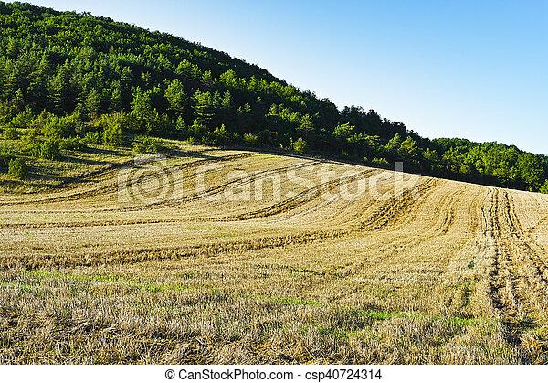 After Harvest - csp40724314