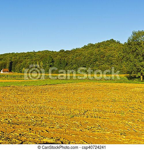 After Harvest - csp40724241