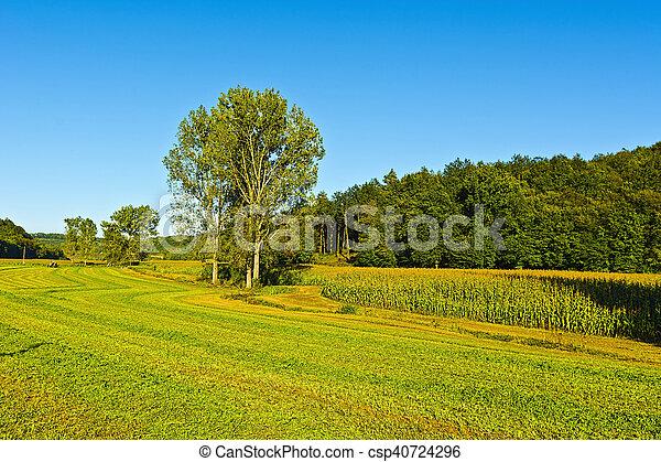 After Harvest - csp40724296