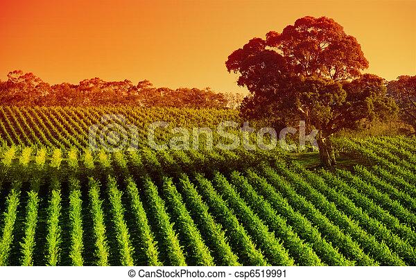 Afternoon Vines - csp6519991