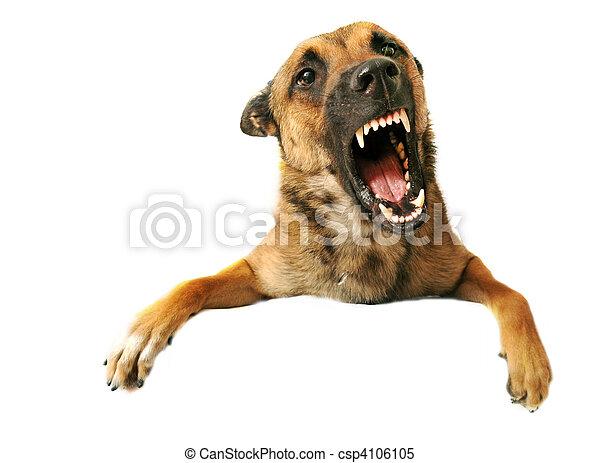 aggressive dog - csp4106105
