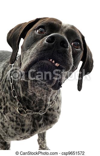 aggressive dog - csp9651572
