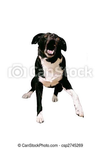 Aggressive Dog - csp2745269
