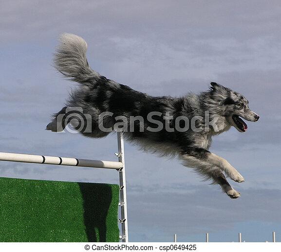 Agility Jumping - csp0649425