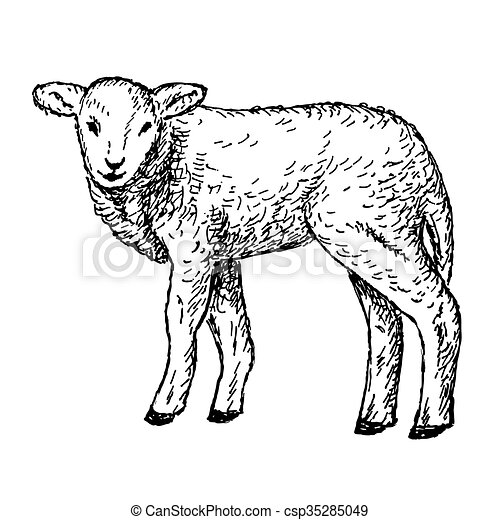 Agneau dessin mains gravure agneau illustration vecteur mains dessin - Dessin agneau ...