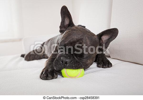 Perro agotado después de jugar - csp28458391