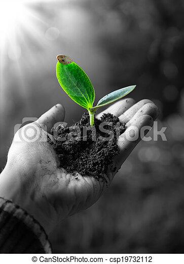 agricolture concept , little plant - csp19732112